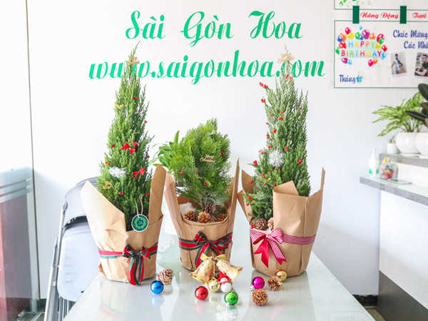 Cung Cap Cay Canh Qua Tang Noel