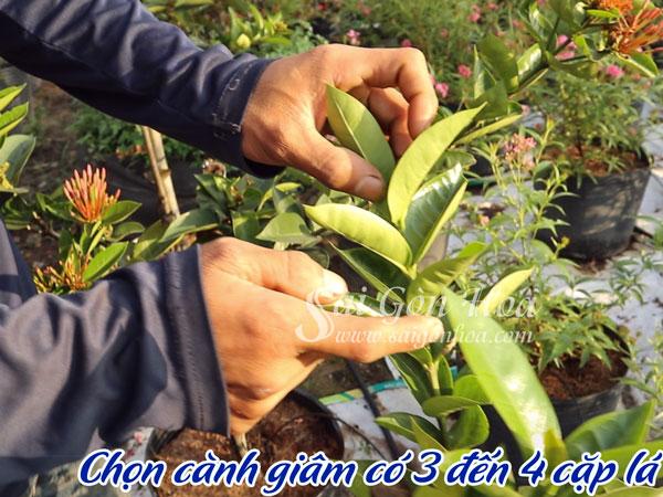 Giam Canh 2 3 La