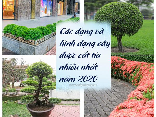 Hinh Dang Va Dang Cay Cat Tia