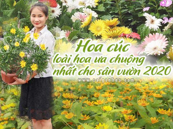 Hoa Cuc Trong San Vuon