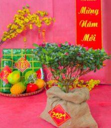 Hoa Do Quyen Bao Bo Tet