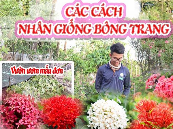 Nhan Giong Bong Trang