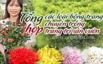 Tong Hop Cac Bong Trang