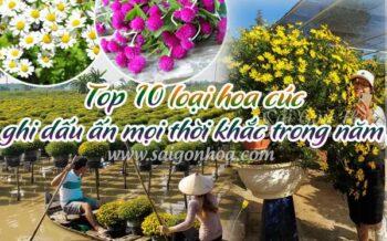 Top 10 Loai Hoa Cuc Ghi Dau An Trong Nam