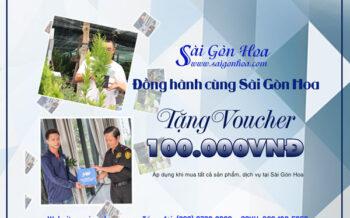 Dong Hanh Sai Gon Hoa