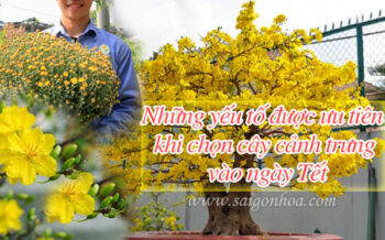 Nhung Yeu To Chon Cay Ngay Tet