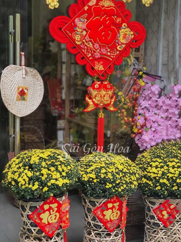 Cuc Mam Xoi Trang Tri Cua Chinh