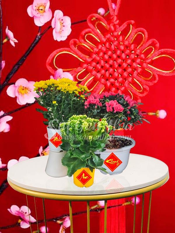 Hoa Combo Tet Phuc An Khang