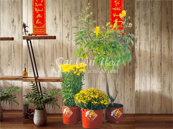 Hoa Tet Loc Vang May Man