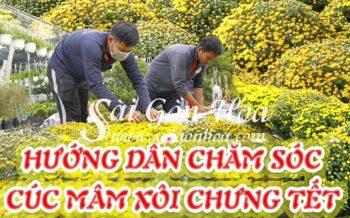 Huong Dan Cham Soc Cuc Mam Xoi