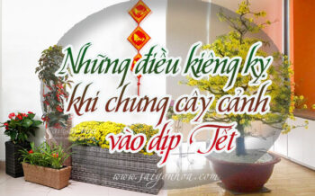 Kieng Ky Chung Cay Ngay Tet