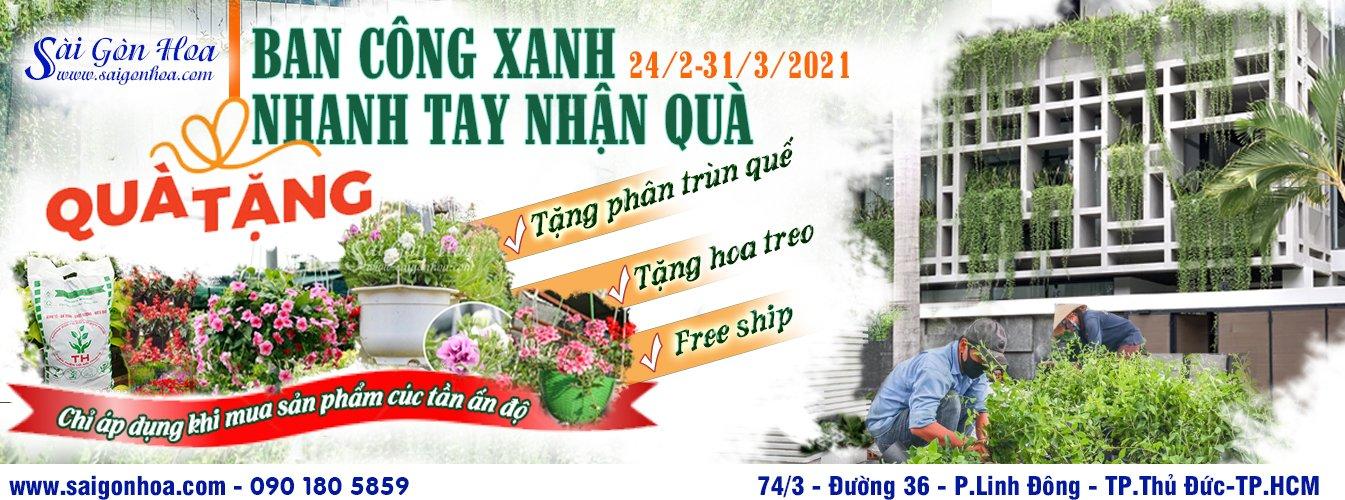 Chuong Trinh Khuyen Mai Ban Cong