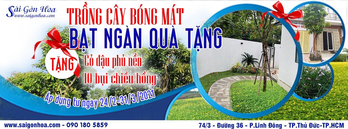 Chuong Trinh Khuyen Mai Cay Bong Mat