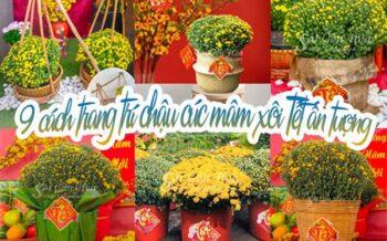 Trang Tri Cuc Mam Xoi An Tuong