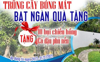Trong Cay Bong Mat Bat Ngat Qua Tang