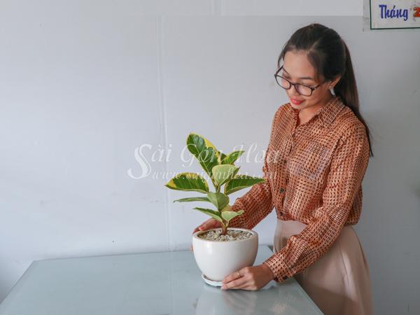 Cây Đa Hoàng Kim
