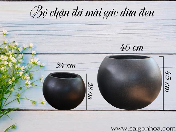 Kich Thuoc Bo Chau Da Mai Gao Dua Den