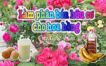 Phan Bon Huu Co Hoa Hong