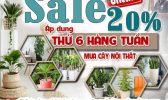 Sale Cay Noi That