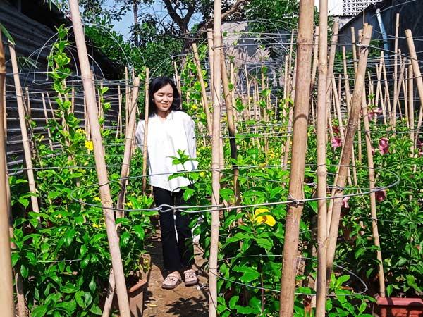 Dây Huỳnh Anh