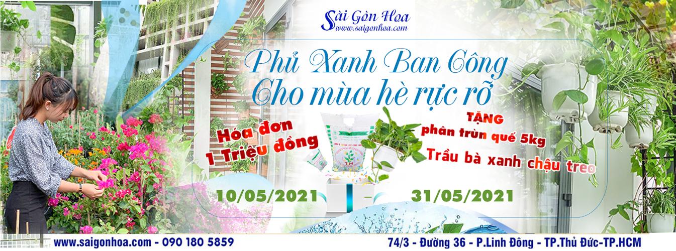 Chuong Trinh Phu Xanh Ban Cong