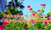 Huynh Anh Leo Tim