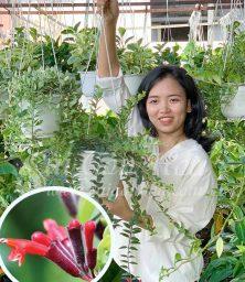 Lan Son Moi Hinh Dai Dien
