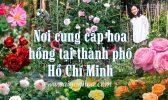 Noi Ban Cay Hoa Hong Tphcm