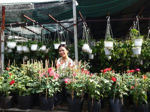 Noi Cung Cap Cay Hoa Hong Color Shell