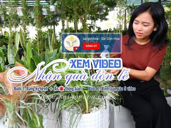 Xem Video Nhận Quà Đón Lễ