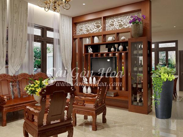 Cây Hoàng Kim Phòng Khách