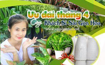 Uu Dai Khach Si Thang Tu