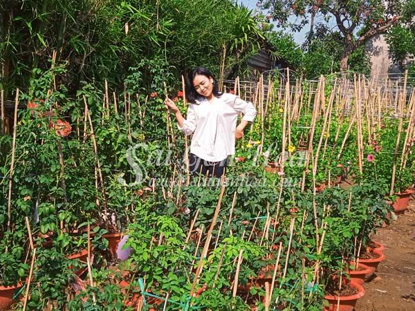 Nơi Cung Cấp Cây Hoa Hồng