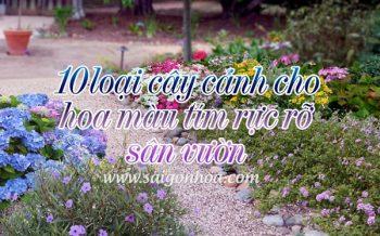 10 Loai Cay Canh Hoa Mau Tim