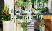 10 Tao Hinh Cay Phoi Ket
