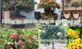 Anh San Pham Cay Trang My