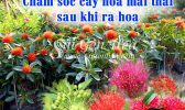 Cham Soc Cay Mai Thai