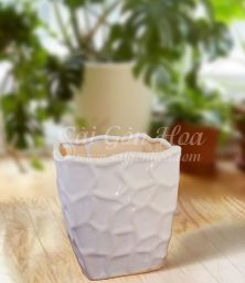 Chau Ang Chu Nhat L3