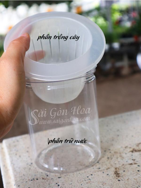 Chậu Nhựa Tự Dưỡng