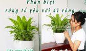 Hinh Dai Dien San Pham 1