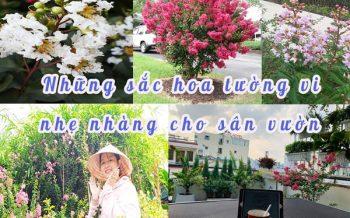 Hinh San Pham