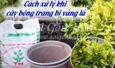 Xu Ly Bong Trang Vang La