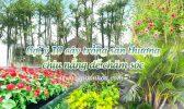 10 Cay San Thuong Chiu Nang
