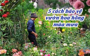5 Cach Bao Ve Vuon Ho Hong Vao Mua Mua