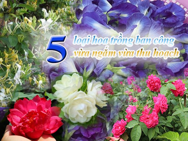 5 Loại Hoa Trồng Ban Công
