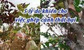 5 Ly Do Ghep Canh That Bai