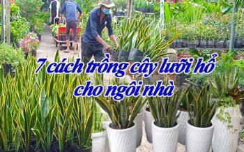 7 Cach Trong Cay Luoi Ho Cho Ngoi Nha