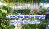 7 Cach Trong Cay San Thuong Tiet Kiem Khong Gian