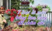 7 Loai Hoa La Mau Trong Ban Cong De Cham Soc