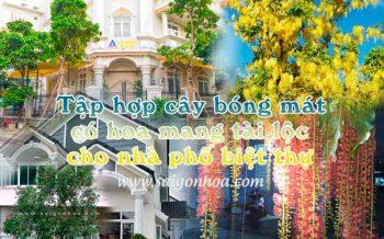 Cay Bong Mat Co Hoa Biet Thu